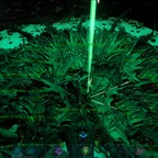 Alien Invasion der Tanz der Reaper